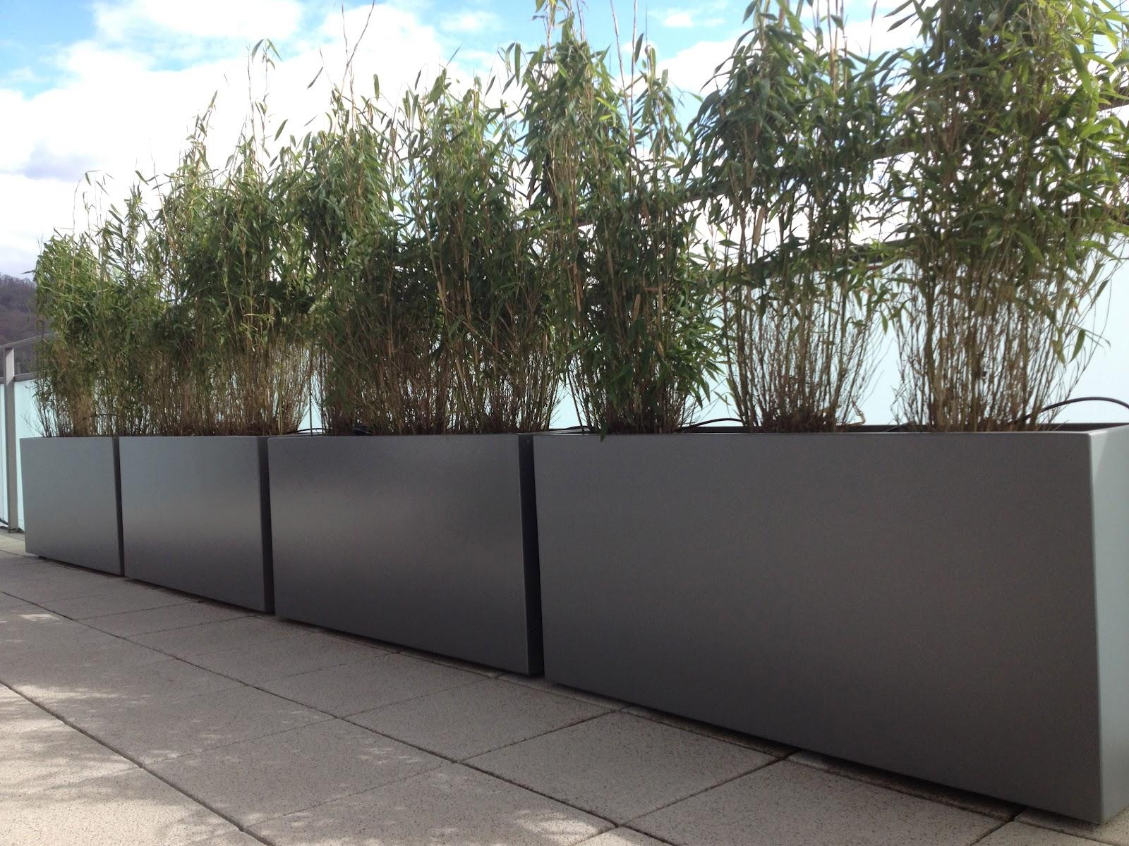 bacs image 39 in bambous en brise vue am nagement terrasse. Black Bedroom Furniture Sets. Home Design Ideas