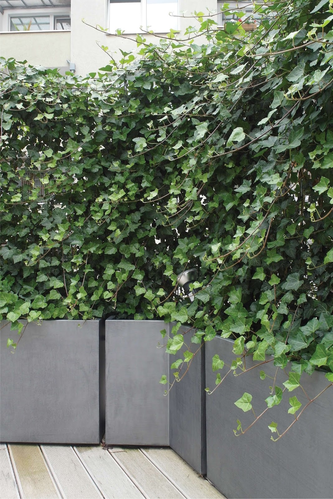 Brise Vue En Lierre jardinière image'in patine zinc - lierre grimpant sur